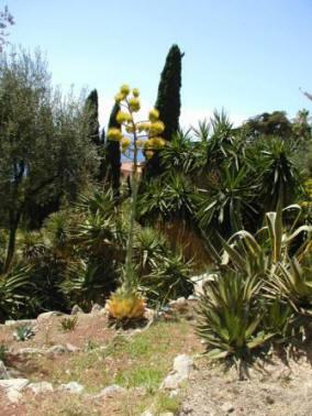 Piante esotiche piante esotiche liguri 235 of liguria for Vendita piante esotiche