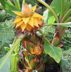 Tropische planten herenthout